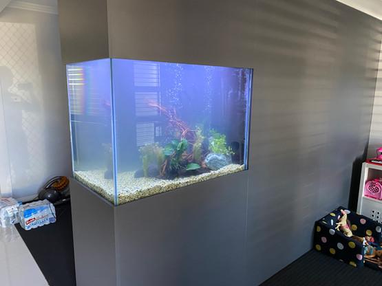 Newly Filled Aquarium