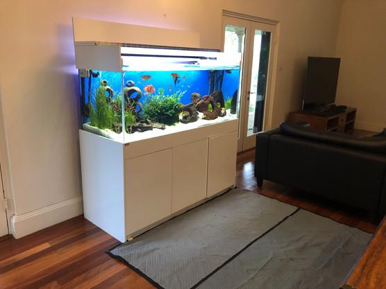 5 x 2 x 2 Mixed Tropical Aquarium