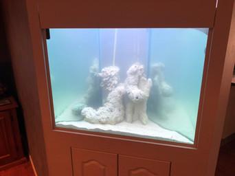 Custom corner aquarium after overhaul