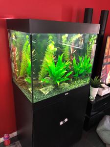 Juwel Lido 200 Planted Aquarium