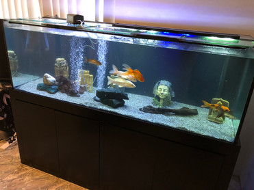 6' x 2' x 2' Coldwater Aquarium