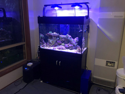 AquaReef 300 Before Move
