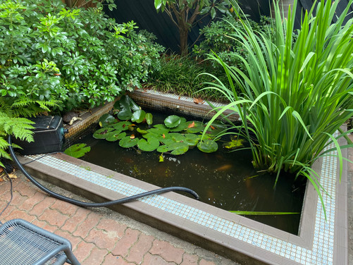 Pond before a clean
