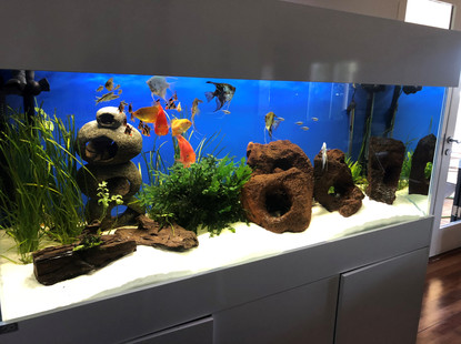 5 foot mixed tropical aquarium
