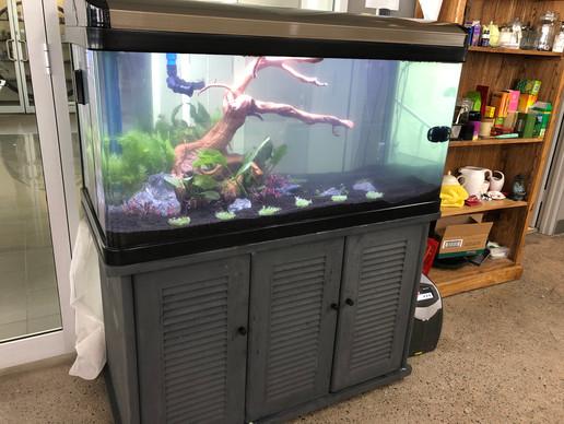 Aquarium filled