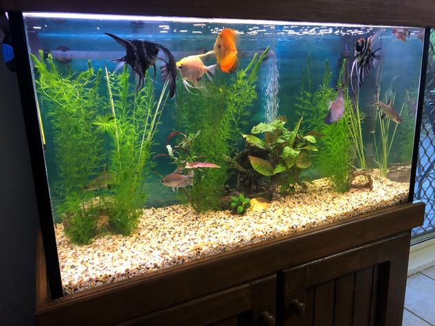 3 Foot Mixed Tropical Aquarium