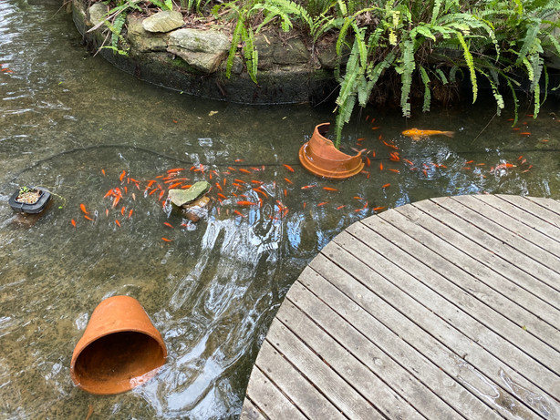Happy fish in their clean pond