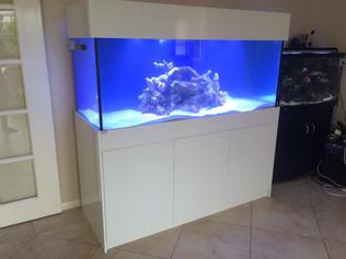 5' x 2'x 2' Custom Aquarium