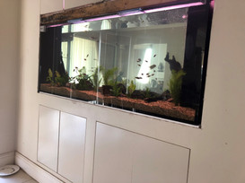Filling of new aquarium