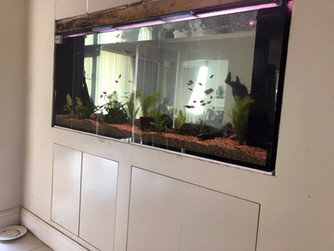 Filling of new aquarium