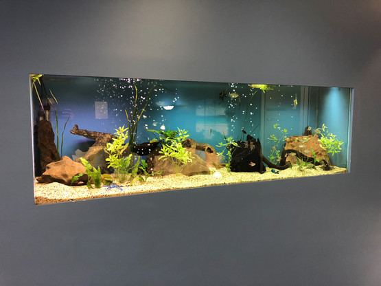 My Horizon Recruitment office aquarium