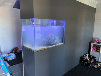 Filling New Aquarium