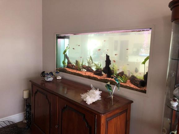 Tropical Discus Aquarium