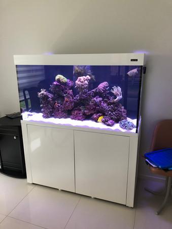 Aquareef 400 Marine Aquarium