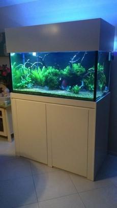 Custom Planted Aquarium