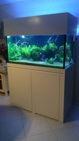 Custom Planted Aquarium