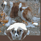chien256x256.pvr.png