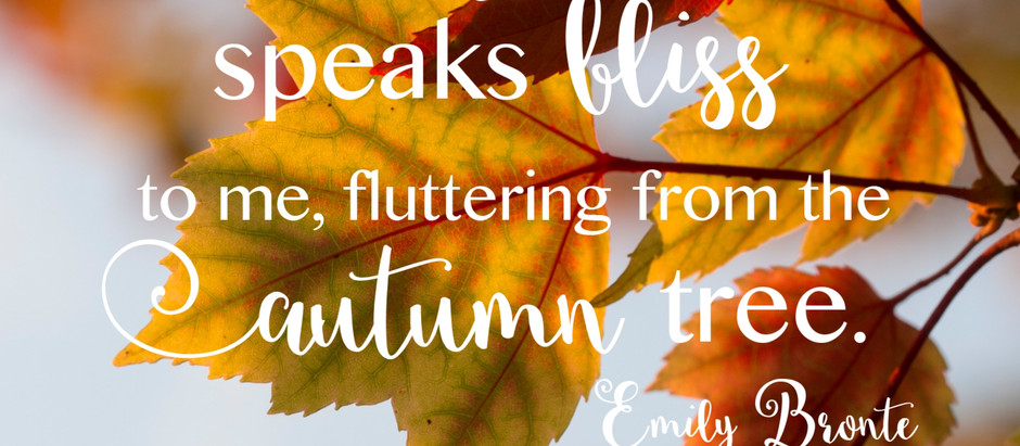 Why I 'Fall' in love with the Autumn every year, My top 5 things to do this season.