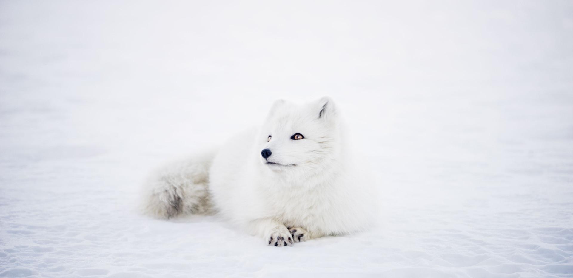 Inspiration - White Snow