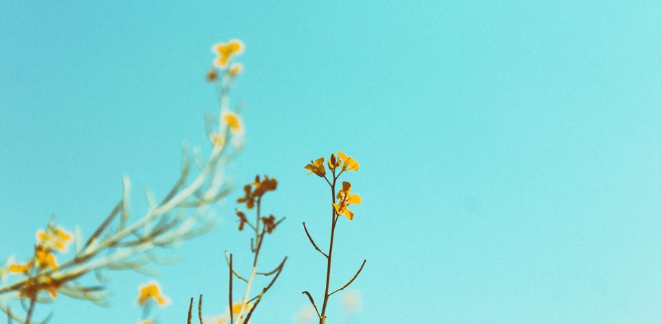 Flores de Maio@By Ricco