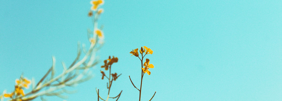 Botanical Products + Pressed Flowers