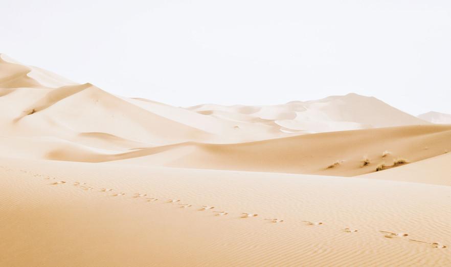 Desert - Buildout Pros