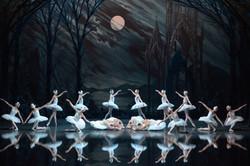 Swan-Lake-Best