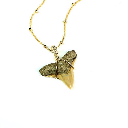 BULL SHARK w/ 14kt beaded chain (575)