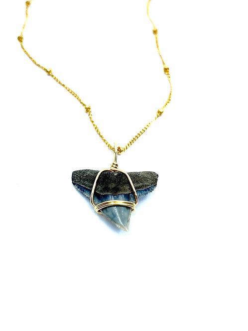 BULL SHARK w/ 14kt beaded chain (72)