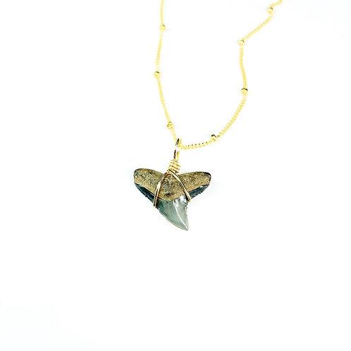 BULL SHARK w/ 14kt beaded chain (573)