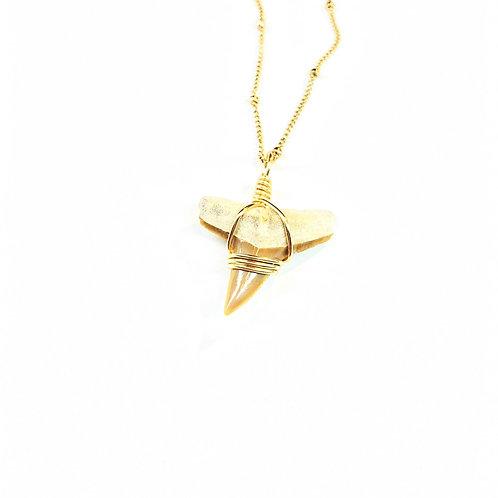 LEMON SHARK (505)