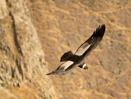 Eagle and Condor Prophecy