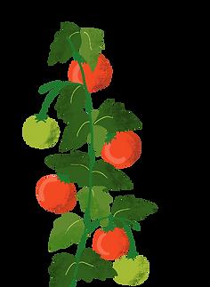 tomatos.png