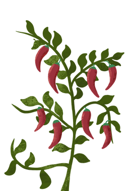 peppers plant.png
