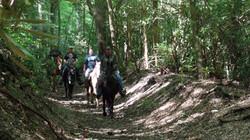 horse rides 173