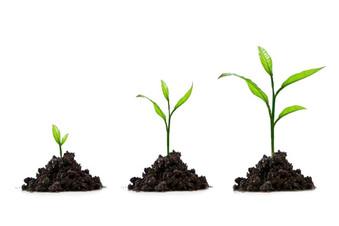 ¿Toma usted en serio su crecimiento espiritual?