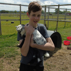 Our Favourite Farm Animals at Freedom Equine