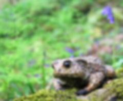 bronze toad sculpture by geckoman