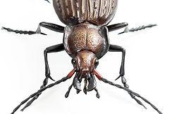 Bronze Granulated Ground Beetle sculpture