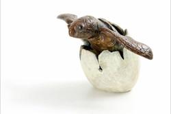 hatching turtle
