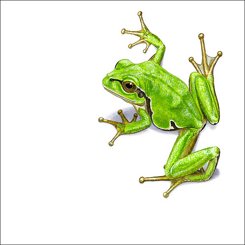 greeting card - green tree frog (code D03)