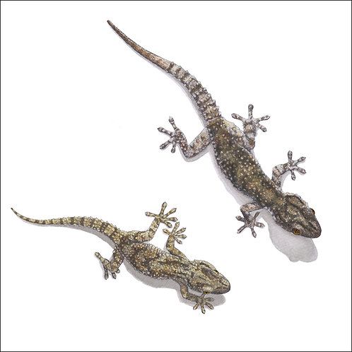 greeting card - two geckos (code D02)