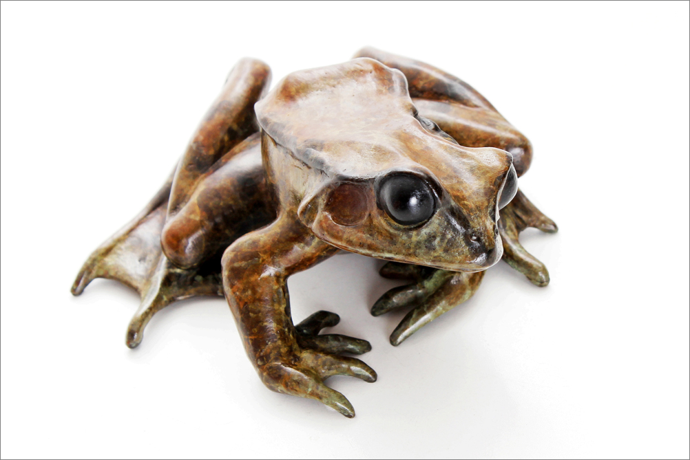 common frog looking left