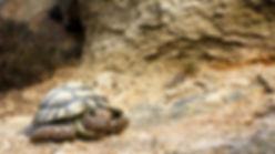 bronze tortoise sculpture by geckoman