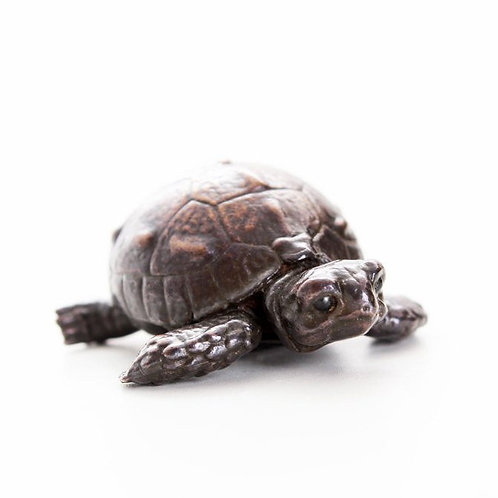 tortoise hatchling on the move - bronze