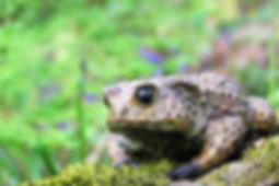 bronze toad sculpture in woods above Hebde Bridge