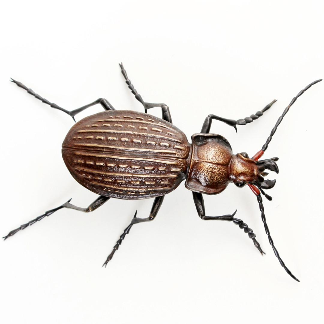 granulated ground beetle