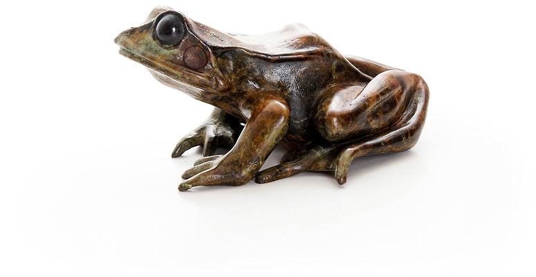 Bronze frog sculpture by Geckoman, John Noble-Milner, wildlife sculptor and artist