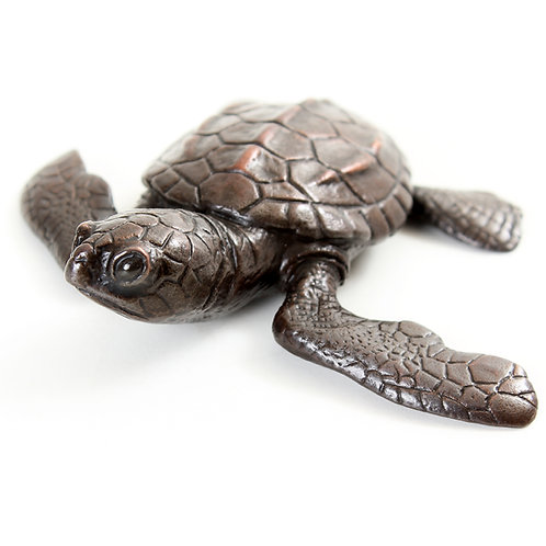 turtle hatchling - bronze