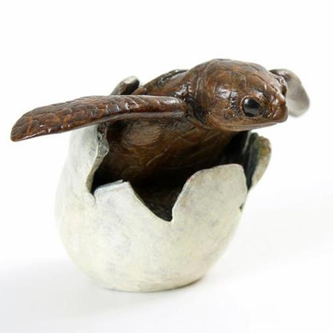 hatching turtle